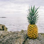 生茎葉と苗・苗木の違いって何!?羽田空港の植物検疫所でパイナップルの芽が取り上げられた話