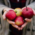 切っても変色しない遺伝子組み換えリンゴがアメリカ中西部で発売される