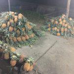 プカンバル(Pekanbaru)で食べておきたいおすすめ熱帯フルーツ
