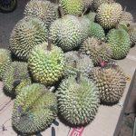 プカンバルでインドネシアのドリアンを食べてきたよ