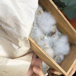 IMO(土着微生物)の集め方・培養方法・畑への撒き方