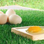 海外・マレーシアで生卵が食べられない理由。安全とは何かを考える