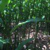 マレーシアで土地を探し始めて7か月。農地契約しました。